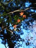 Sista av de ljusa färgerna Starkt, härligt och hänga på till till slutet Royaltyfria Bilder