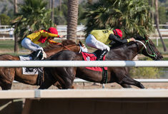 Sista hästkapplöpningar i Arizona till nedgång royaltyfri bild