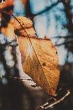 sista leaf Royaltyfria Foton