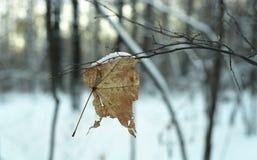 sista leaf Arkivfoto