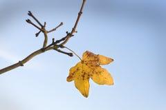 Sista leaf av fallen Arkivfoto