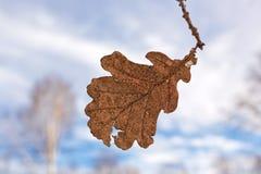 Sista leaf av sommaren Royaltyfria Foton