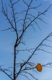 Sista tjänstledigheter på ett träd Arkivfoto