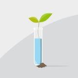 Sista växt från en provrör vektor illustrationer