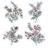 Sistema abstracto de la flor, flor colorido de la fantasía, plantas del garabato Para el diseño de impresiones, telas, tatuaje, d Foto de archivo libre de regalías
