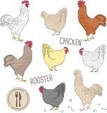 Sistema aislado en el fondo blanco con el pájaro - gallo y pollo e hierba verde stock de ilustración