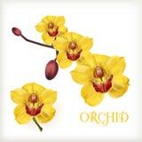 Sistema amarillo de la orquídea Foto de archivo