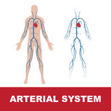 Sistema arterioso Fotografia Stock