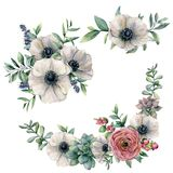 Sistema blanco del ramo de la anémona, del succulent y del ranúnculo de la acuarela Flor, hojas del eucalipto y bayas pintadas a  stock de ilustración