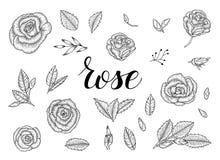 Sistema blanco y negro de rosas libre illustration
