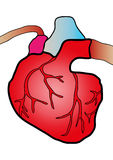 Sistema cardíaco Fotografia de Stock Royalty Free