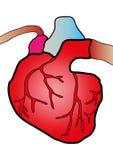 Sistema cardiaco Fotografía de archivo libre de regalías