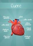 Sistema cardiovascular Imagem de Stock