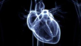 Sistema cardiovascular dos órgãos do corpo humano com anatomia do coração ilustração stock