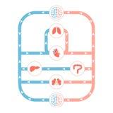 Sistema circulatorio ilustración del vector