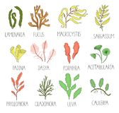 Sistema coloreado del vector de algas marinas stock de ilustración