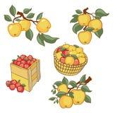 Sistema colorido de la cosecha de la manzana del vintage Vector completamente editable EPS10 libre illustration