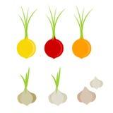 Sistema colorido del icono de la cebolla y del ajo Imagenes de archivo