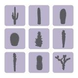Sistema común del vector de iconos del cactus Fotografía de archivo libre de regalías