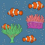 Sistema coralino de los pescados Fotografía de archivo