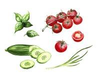 Sistema cortado del pepino, de los tomates de cereza, de la cebolla y de la verdura de hojas de la albahaca stock de ilustración