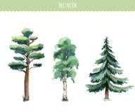 Sistema de árboles de la acuarela Abedul, pino, abeto Fotografía de archivo libre de regalías