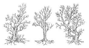 Sistema de árboles dibujados mano ilustración del vector