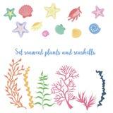 Sistema de alga marina, de coral y de cáscaras libre illustration