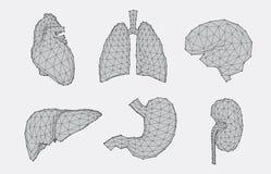 Sistema de anatomía geométrica Foto de archivo libre de regalías
