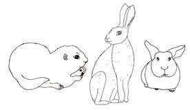 Sistema de animales aislados roedor Gopher, liebre, conejo ilustración del vector