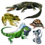 Sistema de animales de los reptiles Foto de archivo libre de regalías