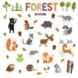 Sistema de animales del bosque hechos en vector plano del estilo Colección de la historieta del parque zoológico para los libros  Imagenes de archivo