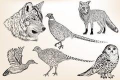 Sistema de animales dibujados mano detallada Imágenes de archivo libres de regalías
