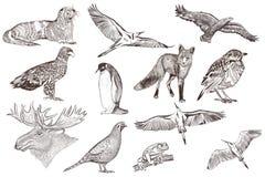 Sistema de animales dibujados mano detallada Foto de archivo