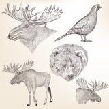 Sistema de animales dibujados mano detallada Imagenes de archivo
