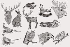 Sistema de animales dibujados mano detallada Foto de archivo libre de regalías