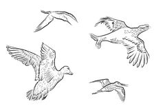 Sistema de aves de caza del vector imágenes de archivo libres de regalías