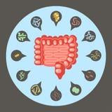 Sistema de bacterias entéricas stock de ilustración