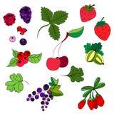 Sistema de bayas coloreadas Fresas, grosellas espinosas, pasas Fotos de archivo