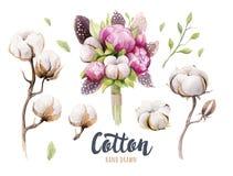 Sistema de cápsula, de peonías y de plumas dibujadas mano del algodón del watercolour