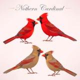 Sistema de cardenales septentrionales libre illustration