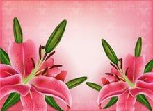 Sistema de cartes cadeaux hermosos con los lirios rosados Fotos de archivo libres de regalías