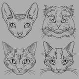 Sistema de Cat Portraits salvaje dibujada mano stock de ilustración