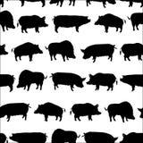 Sistema de cerdos ilustración del vector