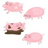 Sistema de cerdos lindos Fotografía de archivo