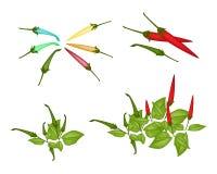 Sistema de Chili Peppers rojo y verde Imagen de archivo libre de regalías