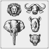 Sistema de cinco animales grandes León, elefante, rinoceronte, leopardo y búfalo ilustración del vector