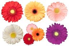 Sistema de cinco flores de la margarita Fotografía de archivo libre de regalías
