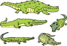 Sistema de cocodrilos cómicos y de cocodrilos graciosamente Fotografía de archivo