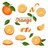 Sistema de color de agrios tropicales exhaustos de la mano Naranja Estilo del bosquejo de la tinta Buena idea para las plantillas stock de ilustración